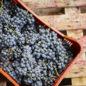 Ecco l'identikit dei consumatori abituali di vino in Italia