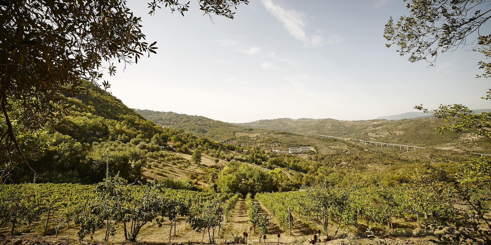 un viaggio nella biodiversità vitivinicola